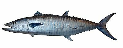 Chainsaw Carving King Mackerel Carved Spanish Kingfish Trophy Wall Mount 1724