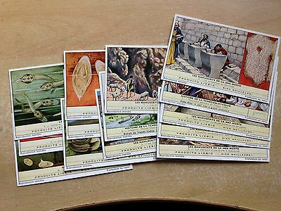 Lovely Rare Vintage Job Lot Of Unsorted,14 Liebig Cards Reproduction
