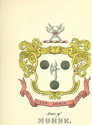 *Great Coat of Arms Morse Family Crest genealogy, would look great framed!