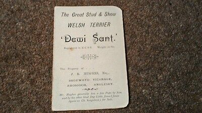 VINTAGE WELSH TERRIER STUD ADVERTISING CARD c1910s DEWI SANT ANGLESEY WALES