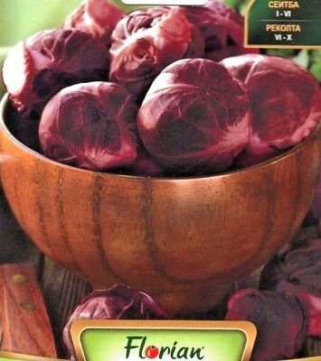 Brussels Sprouts - Red - 125 High Quality Vegetable Seeds /784