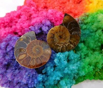 51 Cts. 100%Natural Pretty Matched Pair Ammnonite Sell Minerals Specimen AJ597