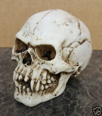 Resin Cast/Hand Painted - Small Vampire Skull Figurine