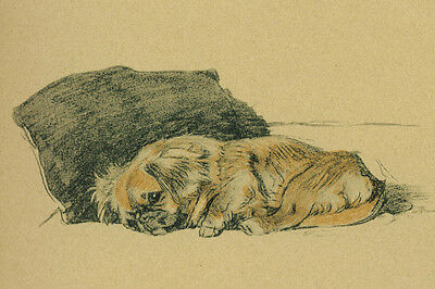 Pekingese Dog 1930's Drawing by Cecil Aldin - LARGE New Blank Note Cards