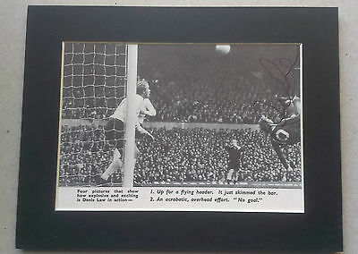 Denis Law - Manchester United Signed Mounted Picture - Scotland Football  Legend
