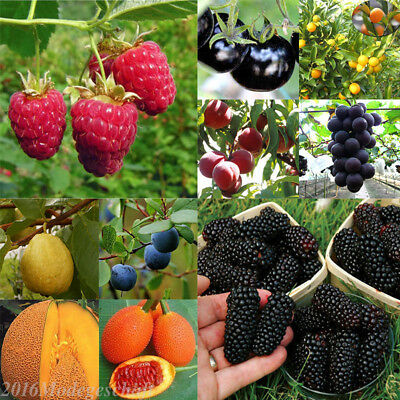 Wholesale Multi Style Fruit Seeds Fruit Seeds Garden Yard Potted Plant Seed