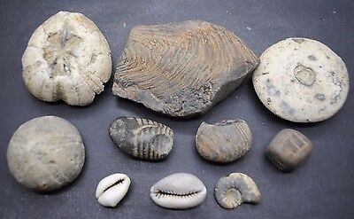 British Found Fossil Collection