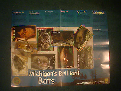 Dnr Poster Michigan's Brilliant Bats Brown Long-Eared Evening Hoary Indiana Red