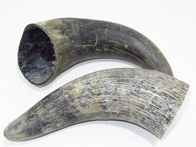 2 Raw cow horn...02B56.... unfinished cow horn....
