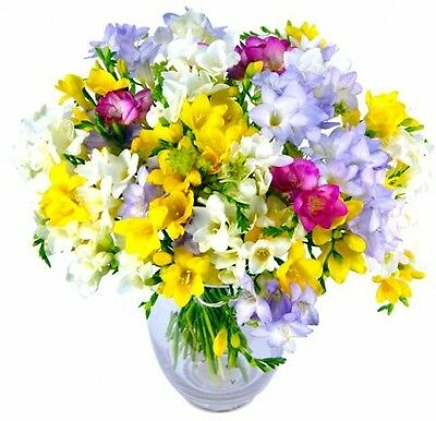 Clare Florist Freesia Fragrance Fresh Flower Bouquet - Colourful Mixed Freesia
