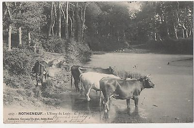 POSTCARD  FRANCE   ROTHENEUF  Cattle at the riverside.