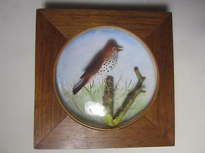 Vintage-Arthur-Peltier-Hand-Carved Wood Thrush-Diorama-Convex-Glass