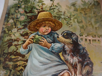 Neat Vintage McLaughlins XXXX Coffee Trade Card Girl Eating Apple With Puppy