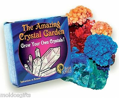 Kit Crystal Growing Science Set Own Experiment Educational Gift Garden K000006
