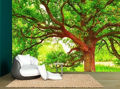 Forest Nature Trees Old Oak Big Tree Wall Mural Photo Wallpaper GIANT WALL DECOR