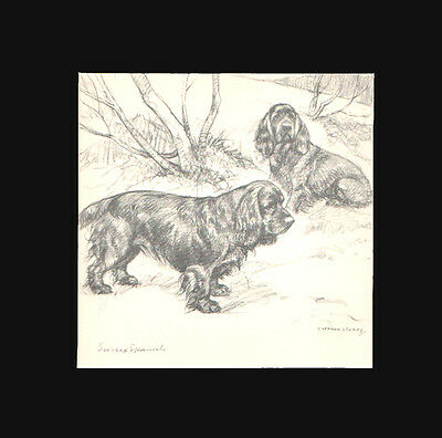 VINTAGE Sussex Spaniel Dog Print by G. VERNON STOKES 1938 Matted