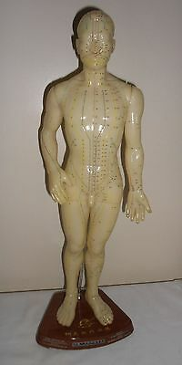 """20"""" Medical Anatomical Teaching Acupuncture Man Model With Stand"""
