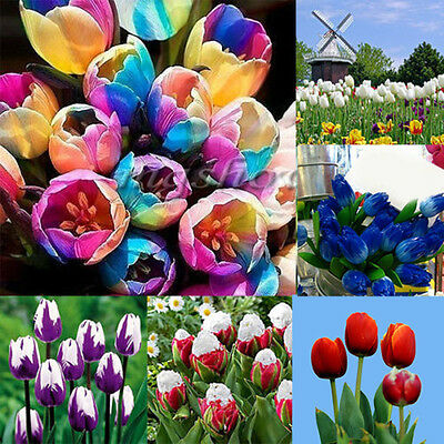 1Pc Colorful Rainbow Tulip Flower Bulbs Seeds Perennials Spring Bloom Home Decor