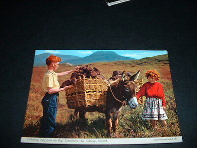 IRELAND  POSTCARD COLLECTING TURF FROM THE BOG Co GALWAY