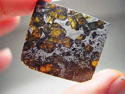 Great Deal! Amazing Crystals! Sensational Seymchan Pallasite Meteorite 11.3 Gms