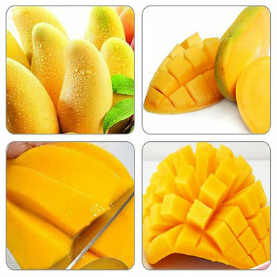 2pcs Giant Mango Seeds Fruit Seed Sweet Delicious Fruit Ready For Planting