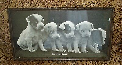 "Antique Framed Print of 5 Pit Bull Puppies THE HOME GUARD 7.5"" X 14"""