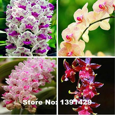Hot Sale!!! Rare Cymbidium orchid, African Cymbidiums seeds plant 200pcs- MIX