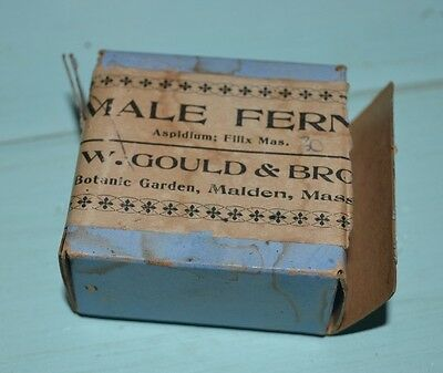 RARE Antique Vintage Box of Male Fern Seeds-Botanic Garden, Malden, Mass.