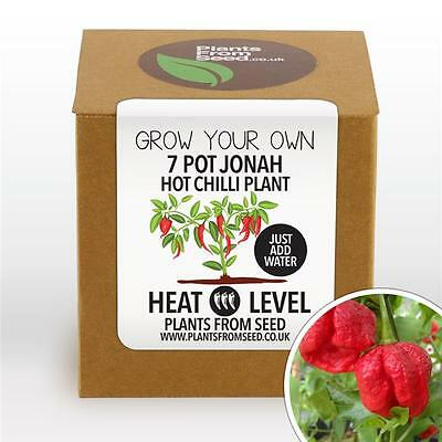 Plants From Seed - Grow Your Own Jonah Chilli Plant Kit