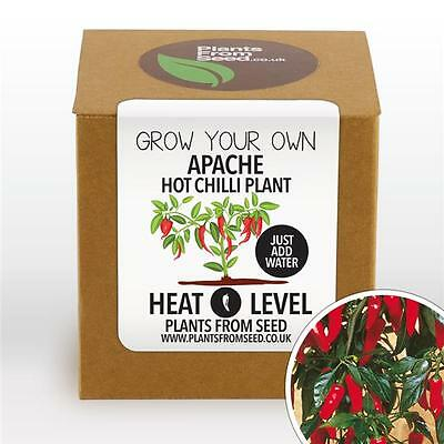 Plants From Seed - Grow Your Own Apache Hot Chilli Plant Kit