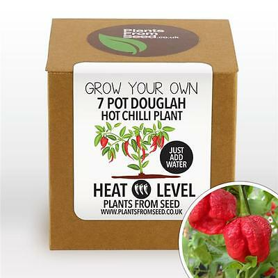 Plants From Seed - Grow Your Own Douglah Chilli Plant Kit