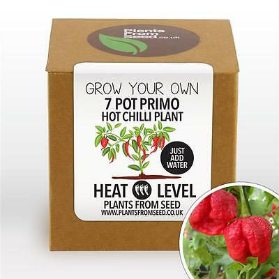 Plants From Seed - Grow Your Own Primo Chilli Plant Kit