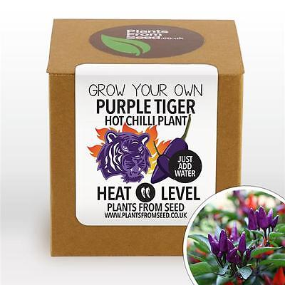 Plants From Seed - Grow Your Own Purple Tiger Chilli Plant Kit