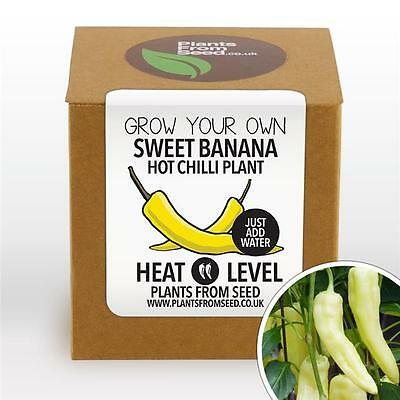 Plants From Seed - Grow Your Own Sweet Banana Chilli Plant Kit