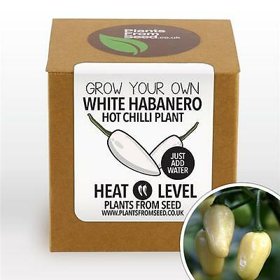 Plants From Seed - Grow Your Own White Habanero Chilli Plant Kit