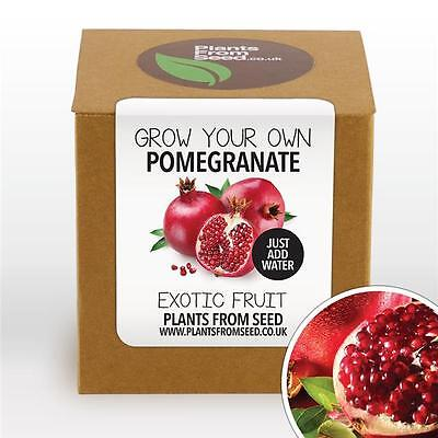 Plants From Seed - Grow Your Own Pomegranate Fruit Plant Kit
