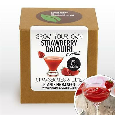 Plants From Seed - Grow Your Own Strawberry Daiquiri Plant Kit