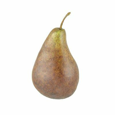 NEW Brown PEAR By Freedom