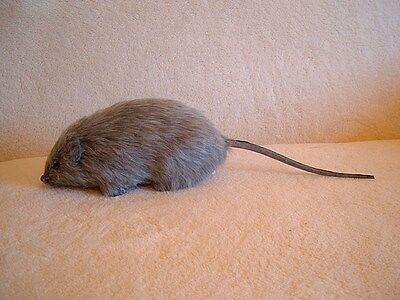 REALISTIC RAT MOUSE HAUNTED HOUSE HALLOWEEN PROP Replica 68gy FREE SHIPPING USA