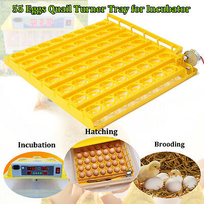 220V 55 Eggs Automatic Hatch Chicken Duck Bird Quail Poultry Tray Incubator