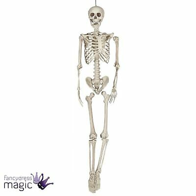 Poseable Human Skeleton 160cm Full Size Sized Halloween Party Prop Decoration BN