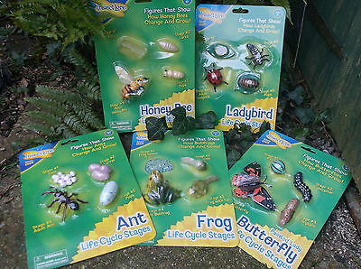 5 plastic LIFECYCLES nature resource FROG LADYBIRD BEE BUTTERFLY ANT life cycle