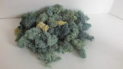Bag of Fresh Lichen 50 Grams Various Green/Yellow Colors (T1)