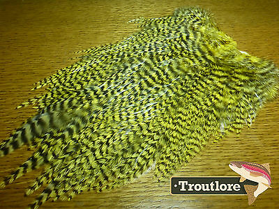 Whiting Farms 4B Rooster Saddle Grizzly Pale Yellow New Fly Tying Cape Feathers