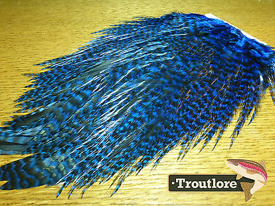 Whiting 4B Rooster Saddle Grizzly Kingfisher Blue New Fly Tying Cape Feathers