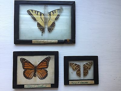 Lot of 3 Taxidermy Butterfly Mounts Framed 1920's Monarch Swallotail Moth