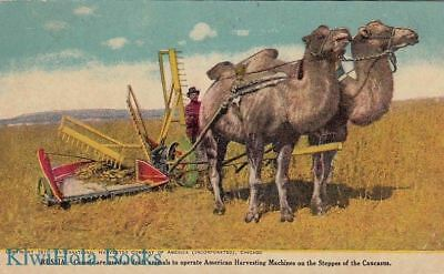 Postcard Camels Draft Animals Russia American Harvesting Machines