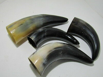 4 Cow horns... 04a75......Polished natural colored cow horn.....ox horns