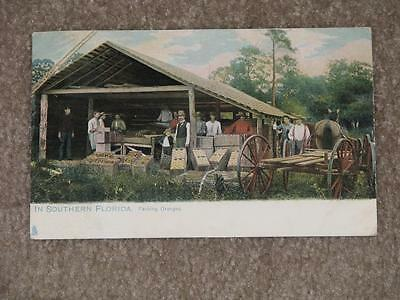Packing Oranges In Southern Florida, Fla., used vintage card