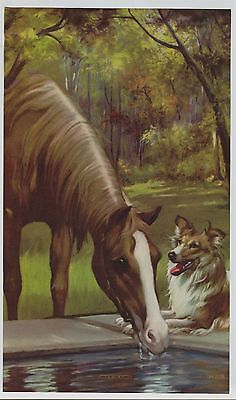 Vintage 1930s-40s Horse Print Titled: Bred in the Purple  Collie Dog